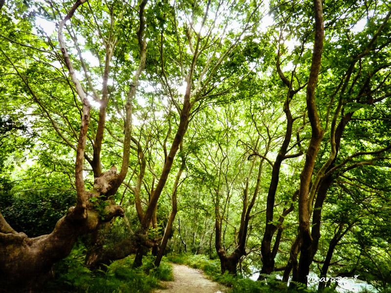 Axerontas path